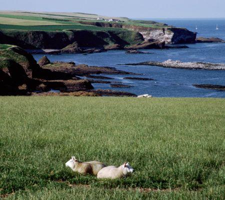 coasta scotia
