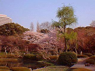 gyoen garden