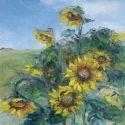 THE SUN FLOWERS