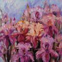 Irisi de munte