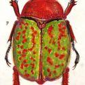 Portret insecte
