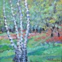Grove with birch trees