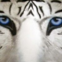 Maltese Tiger (blue tiger)