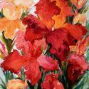 Flori de irisi 2