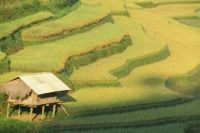 Terasele de orez din Mu Cang Chai, printre cele mai frumoase peisaje din lume
