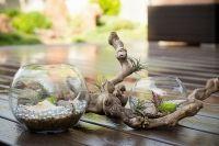 Plantele in terarii - o noua tendinta in decorarea spatiilor interiore