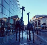 Cele doua girafe din Edinburgh