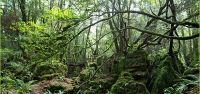 Puzzlewood, sase hectare de natura